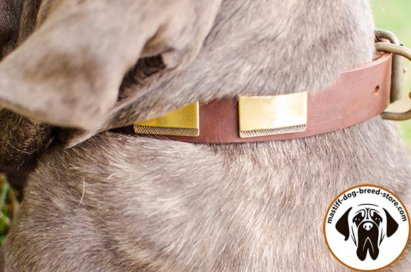 Handmade leather dog collar for Mastino Napoletano