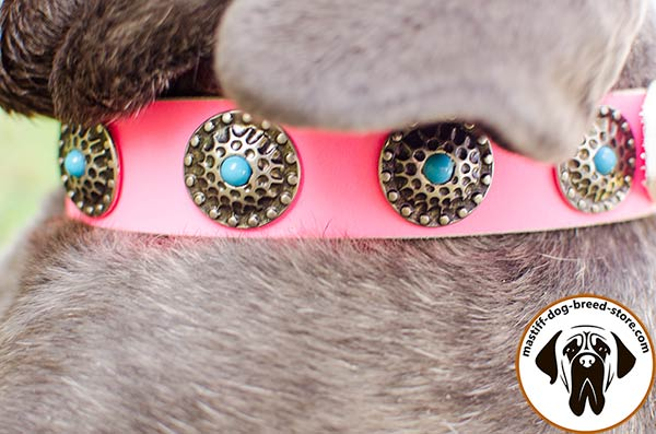 Dazzling leather dog collar for Mastino Napoletano with blue stones