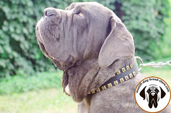 Awesome leather dog collar for Mastino Napoletano collar with embossed studs