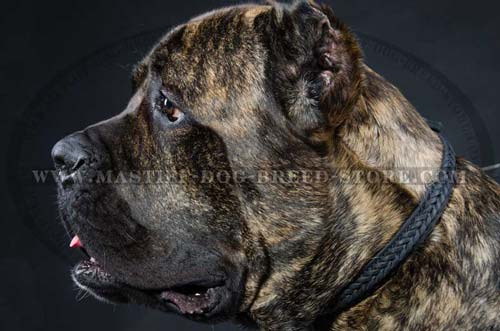 Designer Leather Dog Collar for Mastiff Breeds