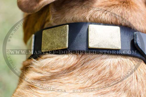 High Quality Leather Canine Collar for Mastiffs