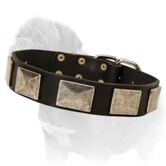 Beautiful leather collar for Mastiff