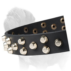 Gorgeous Canine Collar with Studs