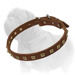 Effective training leather collar for Mastiff