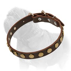 Studded Leather Collar of Brown Color