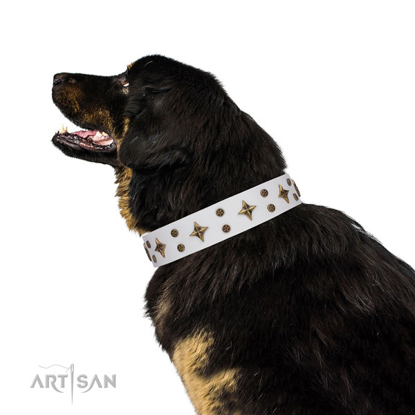 Mastiff incredible genuine leather dog collar for daily walking