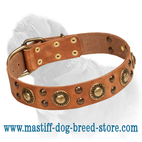 Dog leather collar with riveted decorations