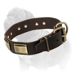 Leather dog collar for Mastiff breed with handset riveted plates