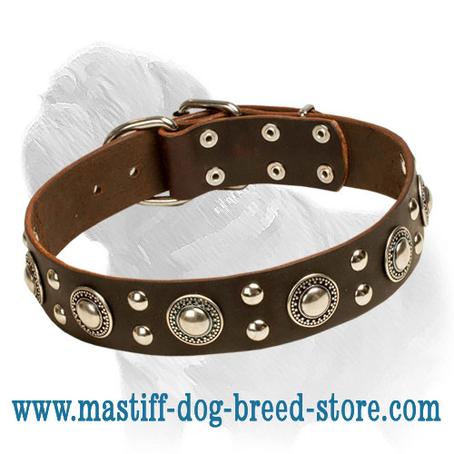 Dog leather collar with hand-riveted conchos