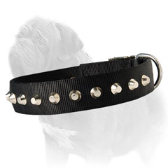 Comfortable for Mastiff dog collar
