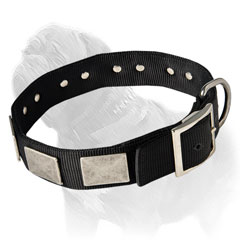Well designed canine collar for effective Mastiff training