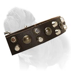 Absolutely non-toxic leather Mastiff collar