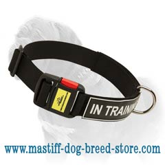 Practical identification collar for your Mastiff