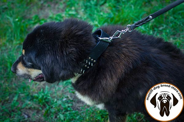 Mastiff black leather collar adjustable  adorned with half-balls and spikes for any activity