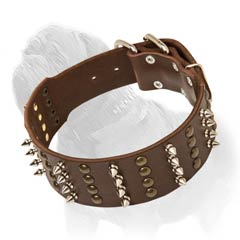 Spiked and Studded Fashion Collar for Mastiffs