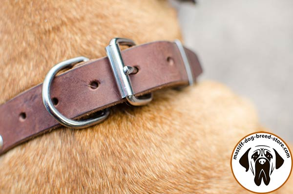 Mastiff brown leather collar of high quality with traditional buckle for improved control