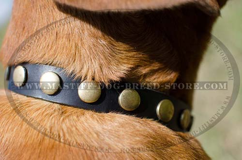 Studded Leather Mastiff Collar