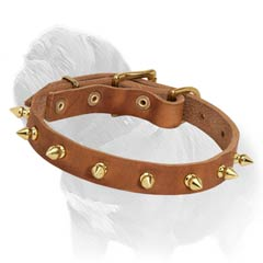 Tan Leather Mastiff Collar with Brass Spikes