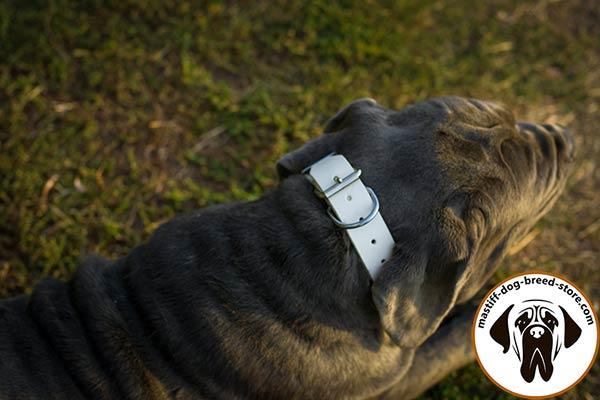 Walking spiked leather dog collar for Mastiff