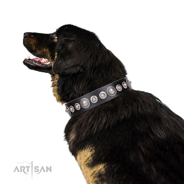 Amazing adorned leather dog collar for comfy wearing