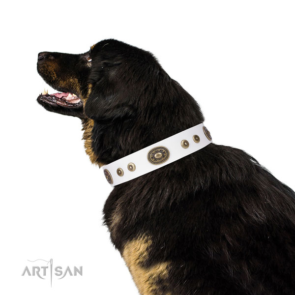 Significant adorned genuine leather dog collar for basic training