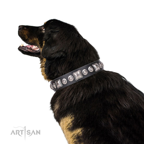 Trendy decorated leather dog collar for walking