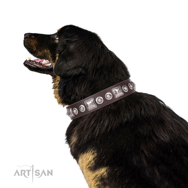 Top notch studded leather dog collar for comfy wearing