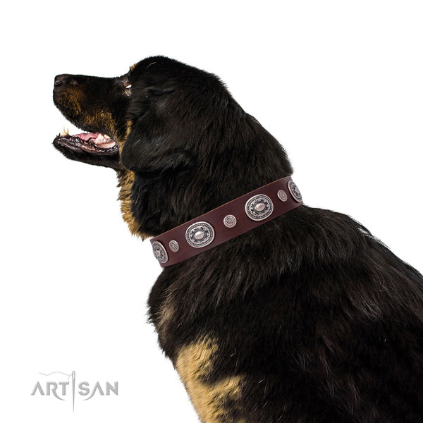 Rust-proof buckle and D-ring on natural leather dog collar for everyday walking
