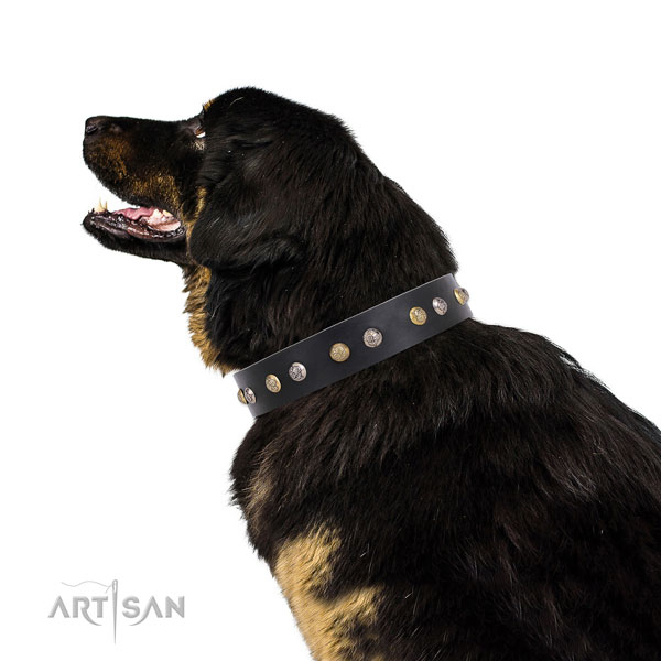 Leather dog collar with corrosion resistant buckle and D-ring for daily use
