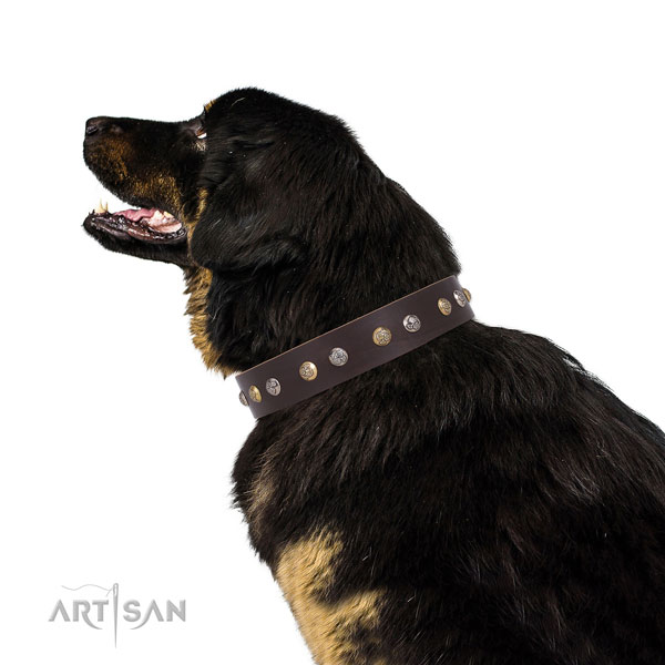 Full grain leather dog collar with rust resistant buckle and D-ring for everyday use