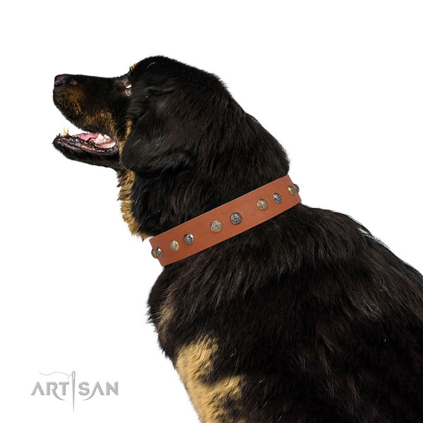 Full grain leather dog collar with corrosion resistant buckle and D-ring for comfy wearing