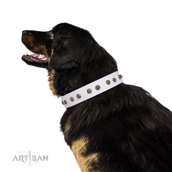 Walking adorned dog collar made of durable natural leather