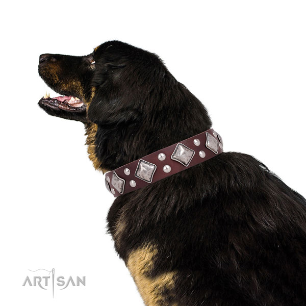 Fancy walking studded dog collar made of top rate genuine leather