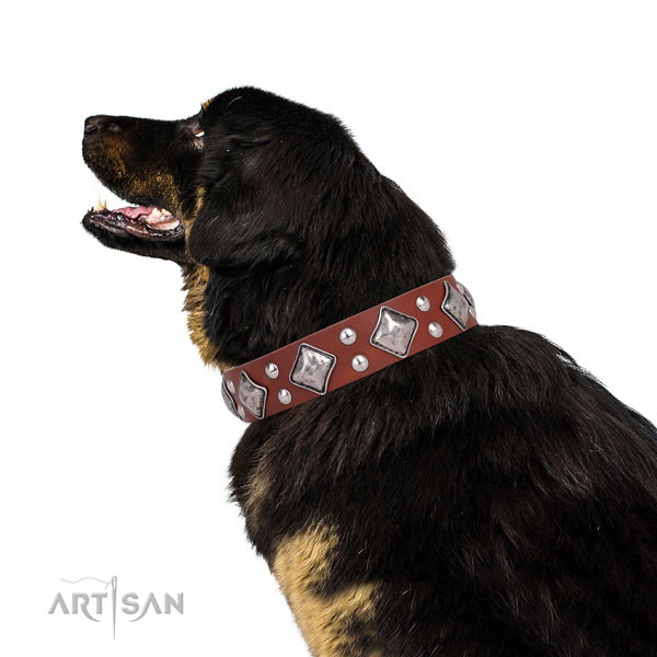 Walking adorned dog collar made of quality leather