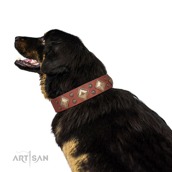 Daily use adorned dog collar made of quality genuine leather