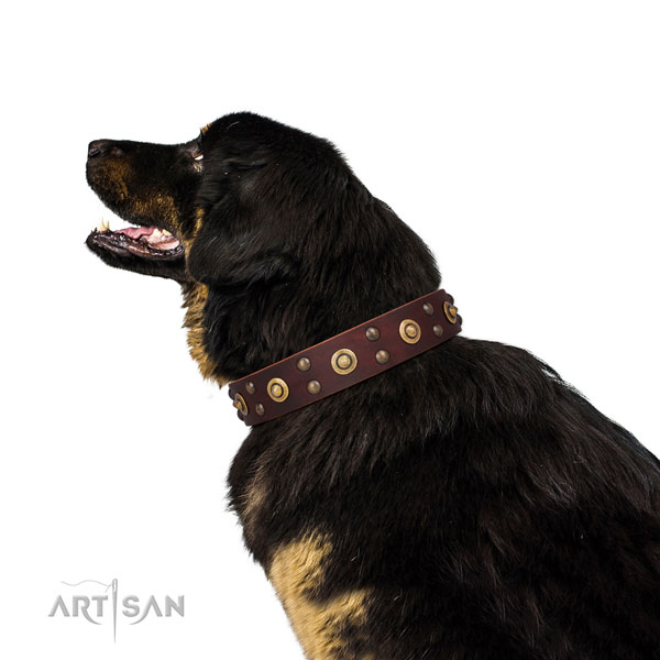 Everyday use dog collar with top notch embellishments
