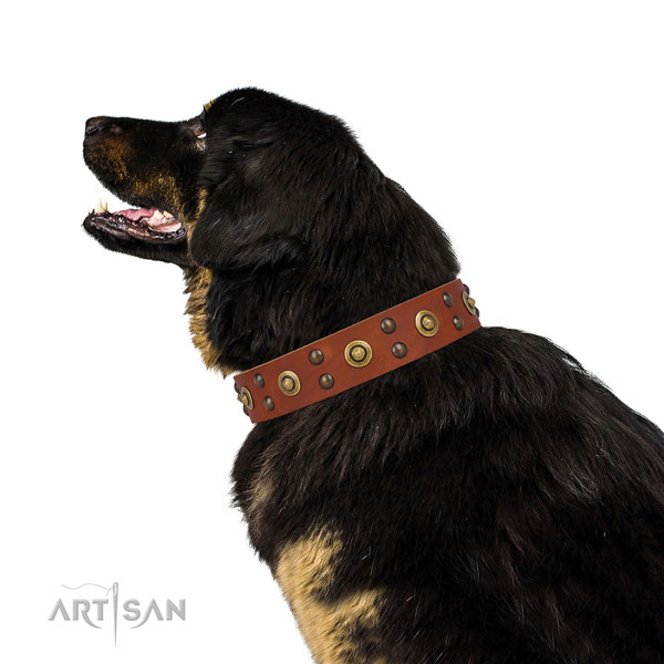 Everyday use dog collar with significant adornments