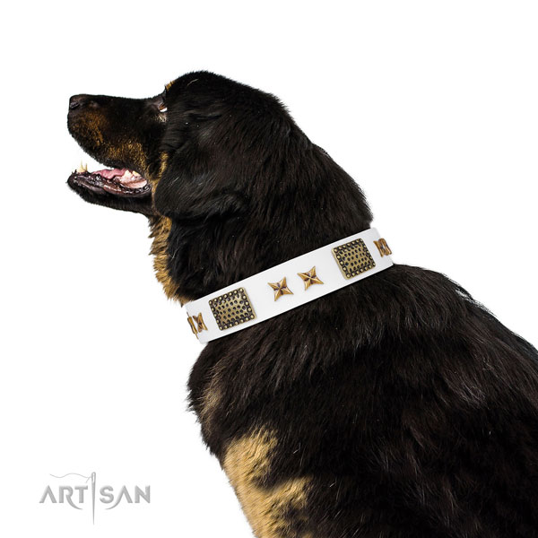 Significant studs on walking natural genuine leather dog collar
