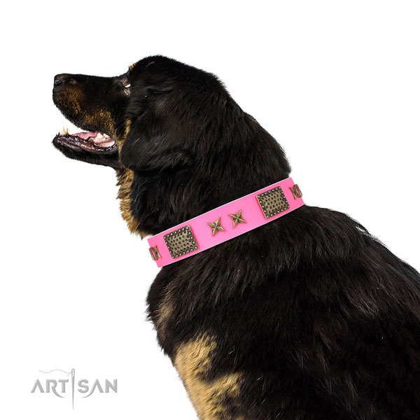 Exquisite adornments on comfy wearing full grain natural leather dog collar