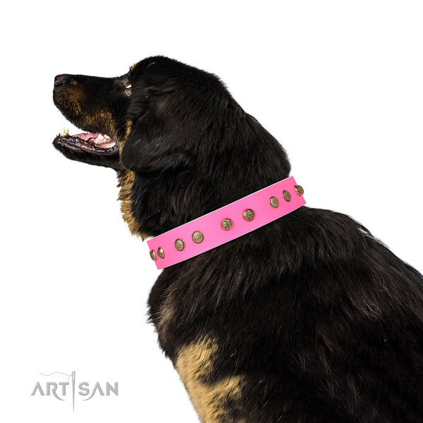 Awesome adornments on comfy wearing full grain natural leather dog collar