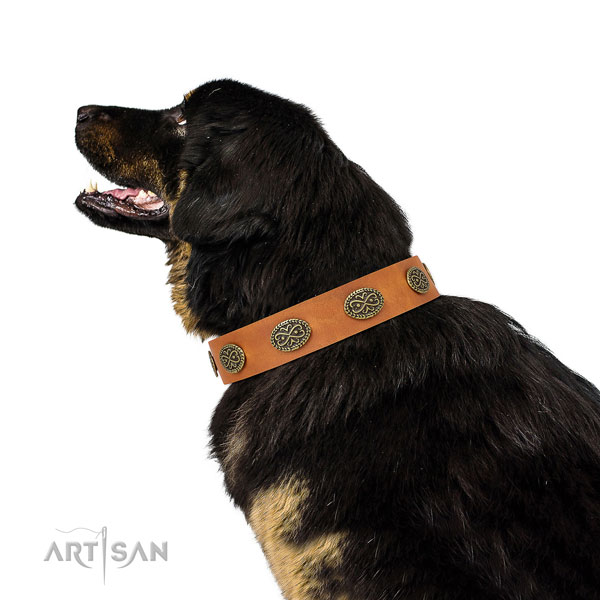 Designer studs on easy wearing natural genuine leather dog collar
