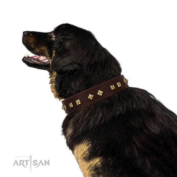 Unique adornments on basic training leather dog collar