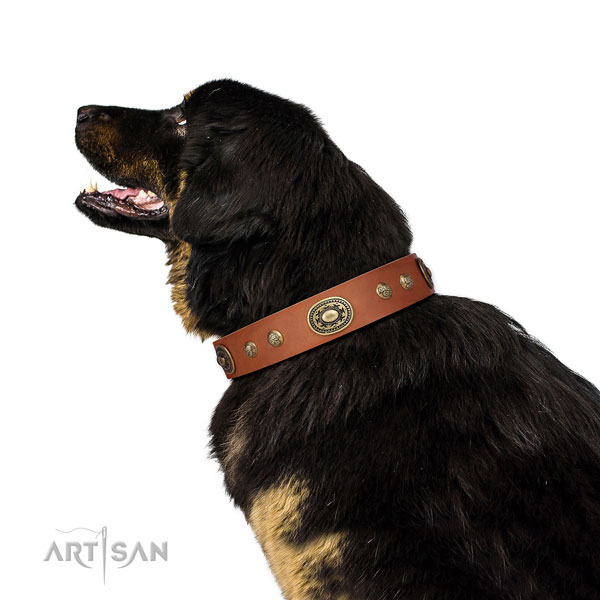 Extraordinary decorations on handy use dog collar