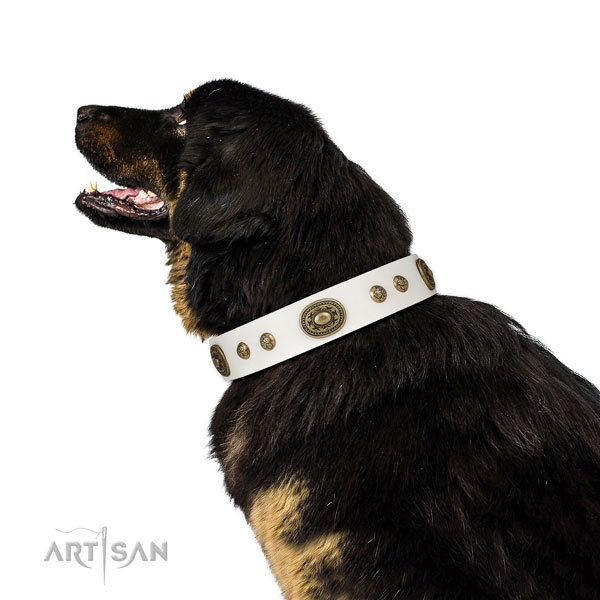 Top notch decorations on easy wearing dog collar