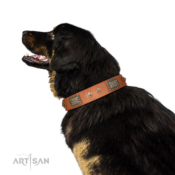Comfy wearing dog collar of leather with incredible embellishments