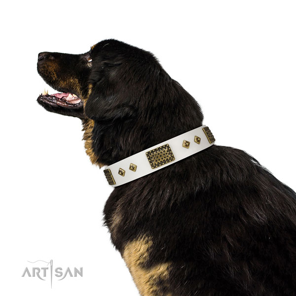 Everyday walking dog collar of genuine leather with awesome embellishments