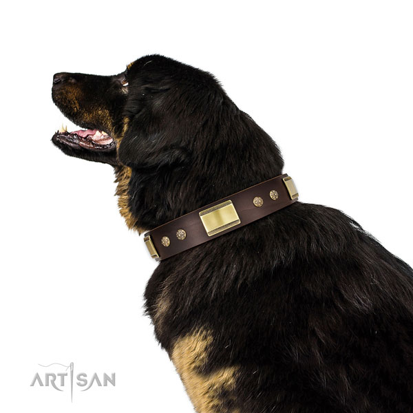 Handy use dog collar of natural leather with stylish design embellishments