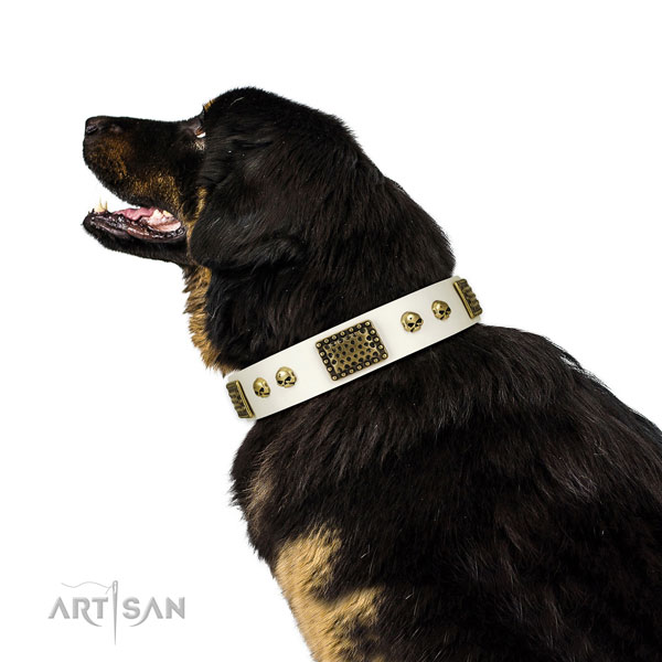 Rust-proof traditional buckle on full grain leather dog collar for daily walking