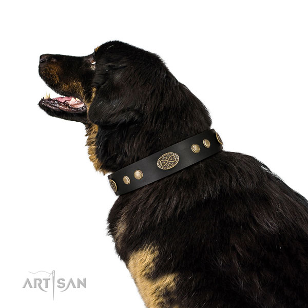Rust resistant traditional buckle on genuine leather dog collar for fancy walking