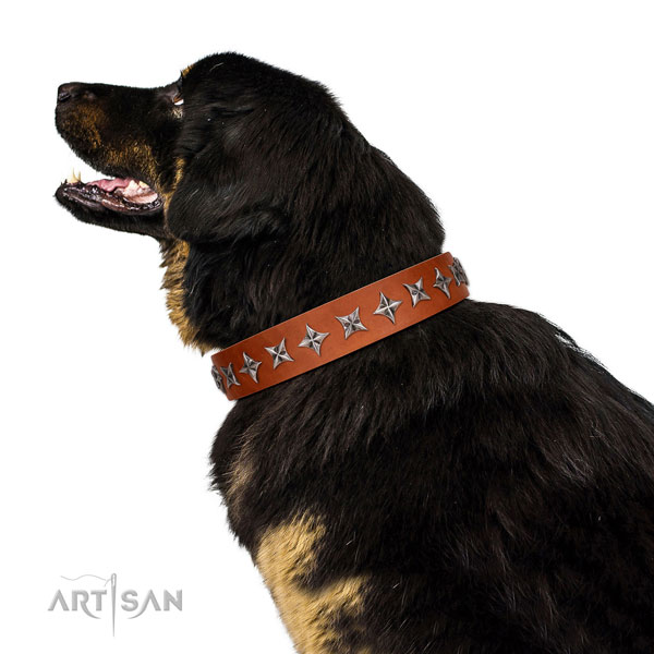 Comfortable wearing studded dog collar of high quality leather
